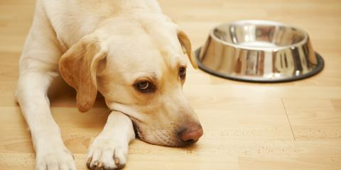 Do Dogs Gain Weight After Being Spayed or Neutered?, Elyria, Ohio