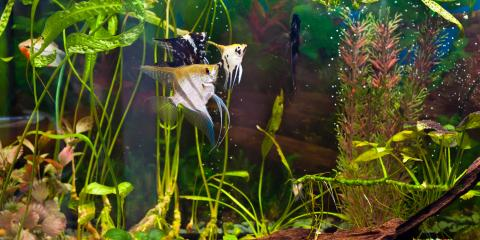 Top 3 Tips for Moving Your Aquarium, Ewa, Hawaii