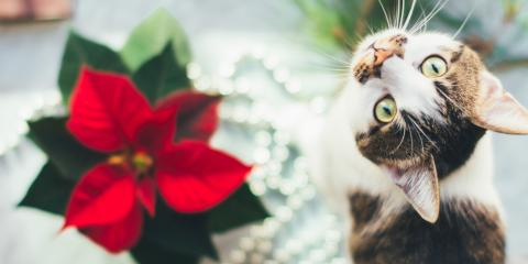 5 Holiday Plants to Keep Away From Pets, Lexington-Fayette Central, Kentucky