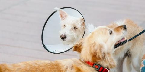 4 Tips to Help Your Dog With Their E-Collar, ,