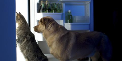 Veterinarian Shares 5 Human Foods Safe for Your Dog (In Moderation!), Rhinelander, Wisconsin
