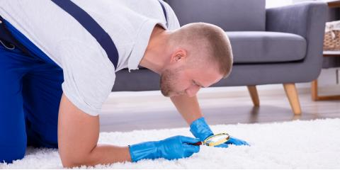 3 Signs of Mold Growth Under Your Carpet , St. Augustine, Florida