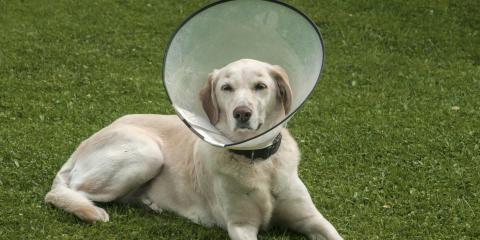 4 Tips to Help Pets Adjust to an E-Collar, Enterprise, Alabama