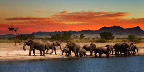 How to Choose the Right Safari for Your Vacation Travel, Pittsford, New York