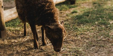 How to Prevent Fungal Growth in Sheep's Wool, Seventy-Six, Iowa