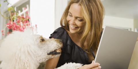 How Are Pets Handled During a Divorce?, Perryville, Missouri