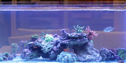 4 Sharks for Your Saltwater Fish Tank, Moraine, Ohio