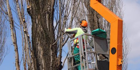 5 Important Qualities of a Reliable Tree Trimming Service, Altadena, California