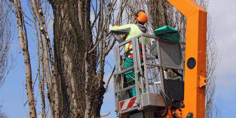Skip DIY Tree Trimming! 3 Reasons to Hire the Experts, St. Charles, Missouri
