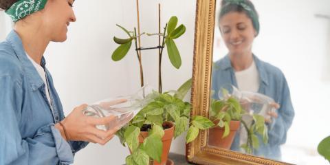5 Indoor Plants for Your Sunroom, Nicholasville, Kentucky