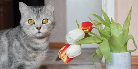 What Flowers Are Dangerous to Household Pets?, Lakeville, Connecticut