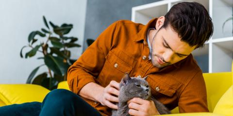 5 Ways to Protect Your Pet During Home Renovations, Boles, Missouri