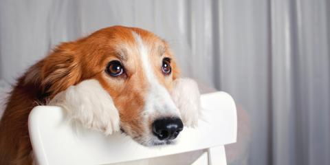 Local Dog Day Care Shares 3 Signs & Solutions for Doggy Boredom, Manhattan, New York