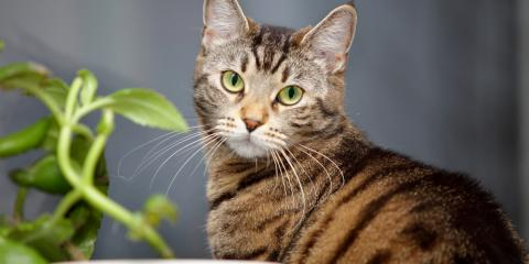 4 Indoor House Plants That Are Harmful to Cats, Kabletown, West Virginia