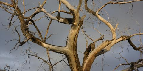 4 Signs Your Tree Is Dying & Needs Professional Help, Miamitown, Ohio