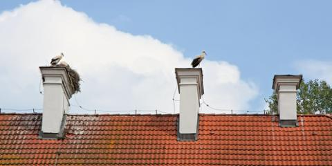 Chimney Cleaning Experts Explain What to Do About Stuck Birds, Pine Ridge, Alabama