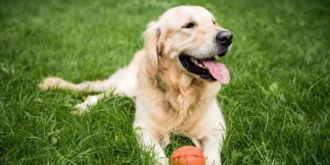 3 Reasons Dogs Like to Roll in the Grass, Lincoln, Nebraska