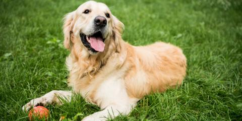 3 Reasons to Vaccinate Your Dog for Lyme Disease, Jefferson, Ohio