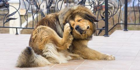 What Should You Do If Your Dog Has Fleas? , Lincoln, Nebraska
