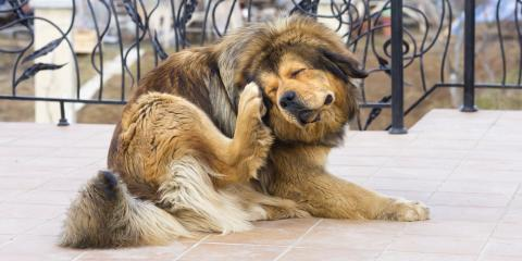 Pet Care 101: 3 Reasons Your Dog May Be Scratching, Milford, Ohio