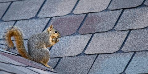 5 Pests That Can Damage Your Roofing, Clarksville, Maryland
