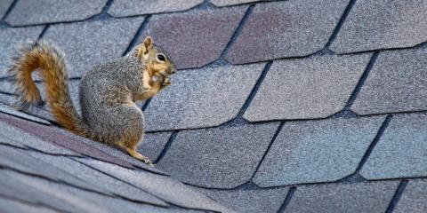 Don't Let These Alaskan Animals Damage Your Roofing, Anchorage, Alaska