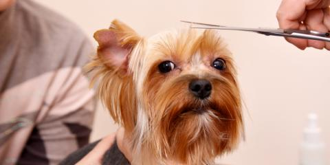 4 Tips for Preparing Your Pooch for Their First Pet Grooming Session, Richfield, Ohio