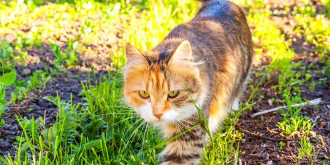 Pros & Cons of Different Mouse Extermination Methods, New Braunfels, Texas