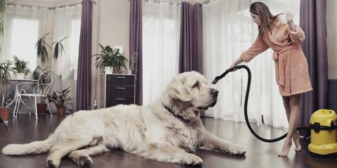 What Can Pet Owners Do to Maintain Carpeting?, Hamilton, Ohio