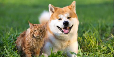 Do You Need Pet Insurance? A Veterinarian Explains, Fairport, New York