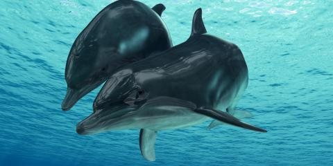 3 Species You May See During Hawaii Dolphin Excursions, Waianae, Hawaii