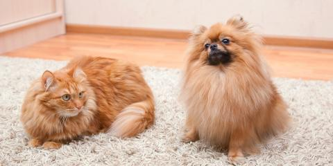 4 Ways Pet Owners Can Maintain a Clean Carpet, Anchorage, Alaska
