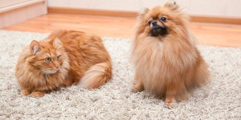 4 Helpful Carpet Cleaning Tips for Pet Owners, Ewa, Hawaii