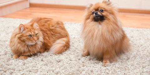 3 Reasons Pet Owners Should Get Professional Carpet Odor Removal, Kalispell, Montana