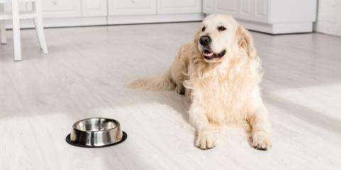 3 Types of Flooring Choices for Pet Owners, West Whitfield, Georgia