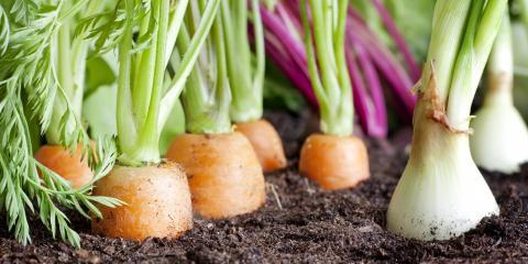 3 Tips for Growing a Vegetable Garden, Delhi, Ohio