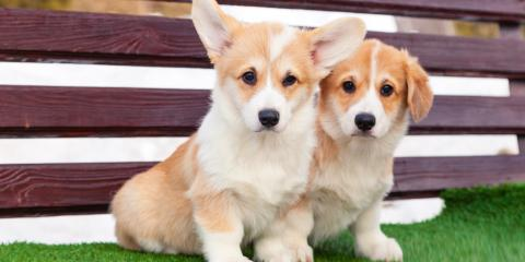 A Guide to Caring for a New Dog, Middlefield, Ohio