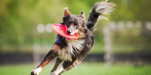 Top 5 Tips for Summer Dog Grooming, Lincoln, Nebraska