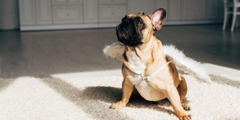 3 House-Training Tips to Protect Your Carpet From Pet Accidents, Butte, Alaska