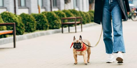 How to Manage a Dog Who Pulls on Their Leash, Oceanside-Escondido, California