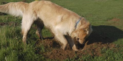 How Pets Can Damage Your Lawn & How to Prevent It, Berrett, Maryland