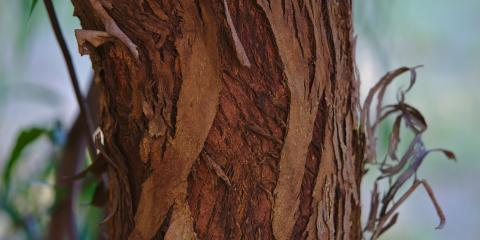 The Do's & Don'ts of Dealing With a Diseased Tree, ,