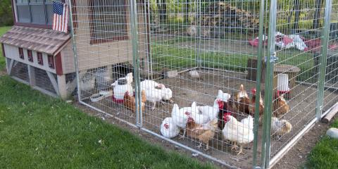 3 Tips for Building a Chicken Run , Ashland, Missouri