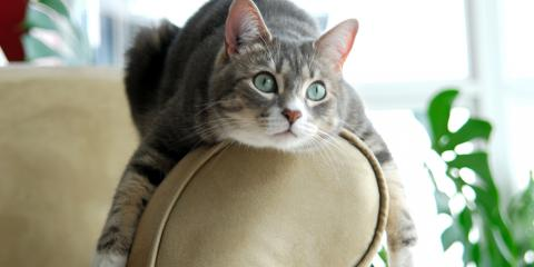 3 Reasons to Get Your Female Pet Spayed, Rosenberg-Richmond, Texas