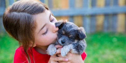 3 Tips for Housetraining a Puppy, Round Lake, Wisconsin