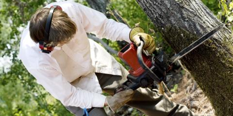Tree Removal Expert Covers 3 Signs a Tree Could Fall, Mukwonago, Wisconsin