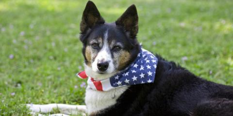 Do's & Don'ts of Celebrating the 4th of July With Your Dog, McKinney, Texas