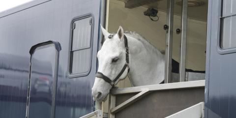 3 Reasons to Customize Your Horse Trailer, Albuquerque, New Mexico