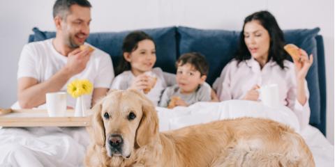 5 HVAC Tips for Pet Owners, Cornelia, Georgia