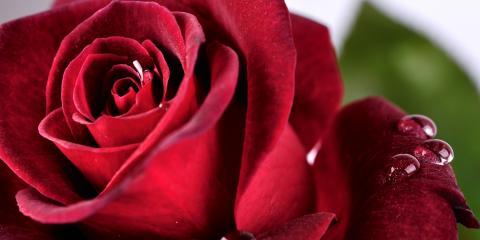 Top 5 Flower Arrangement Ideas for Valentine's Day, Erlanger, Kentucky